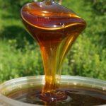 Гречишный мед; полезные свойства и противопоказания